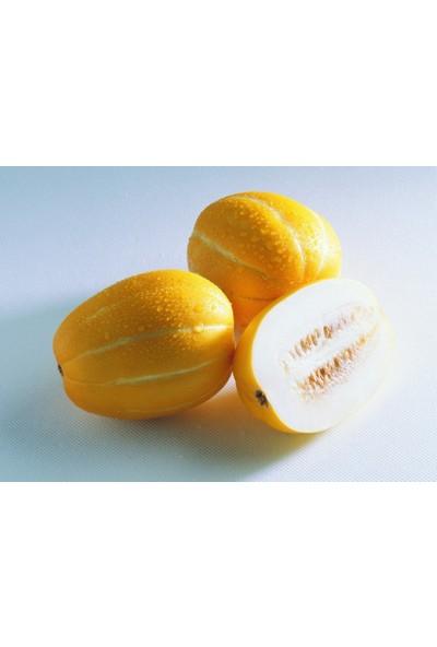 Portakal Çiçeği Parfüm Kavunu Tohumu (%100 Yerli) 6 Adet