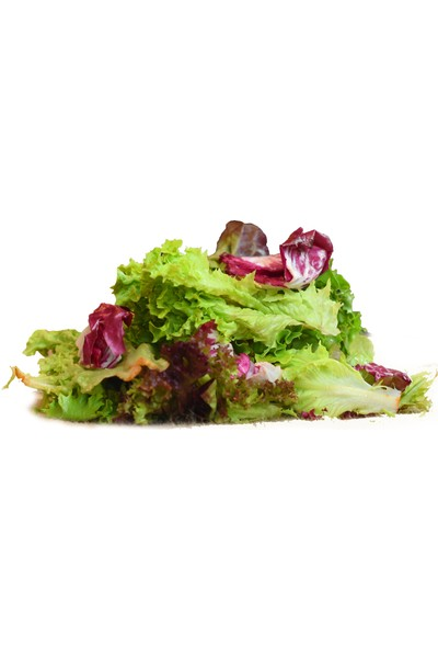 Meyve Ağacım Akdeniz Salata - 5 Li