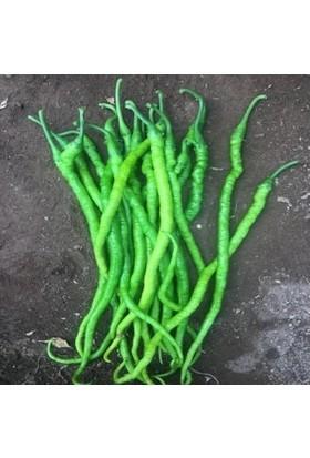Karahasanoğlu Tarım Yerli Kıl Tatlı Biber Tohumu 10 gr (Ort 1200 Tohum)