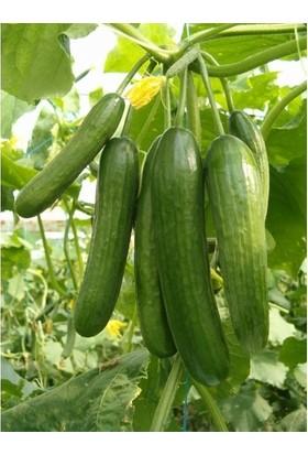 Karahasanoğlu Tarım Yerli Salatalık Tohumu Çengelköy 10 gr (Ort 300 Ad Tohum)