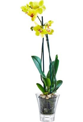Holiday Plastart 1.4 Lt. Kristal Orkide Saksı   Şeffaf