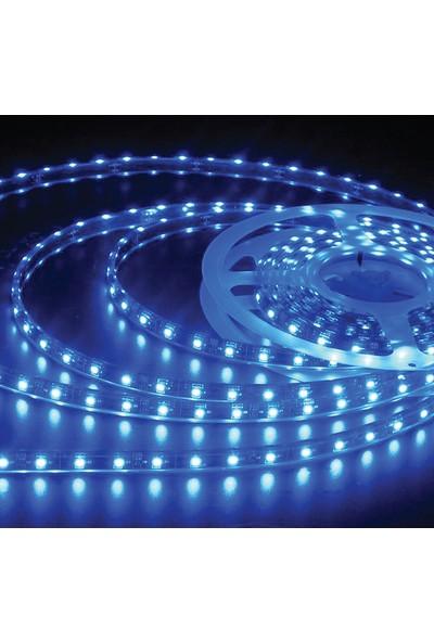 Ack AS01-00305 Yeşil 12V Üç Çip 60 Ledli Silikonsuz Şerit Led5 m