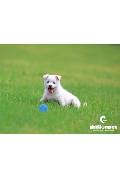 Griffonpet Sesli Köpek Küçük Oyuncak Top Kauçuk Çapı 7 cm