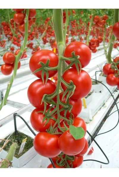 Karahasanoğlu Tarım Yerli Cherry Domates Tohumu 1 gr (Ort 400 Ad Tohum)