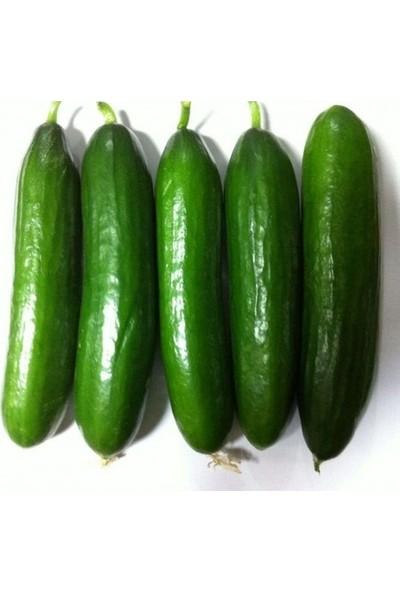 Karahasanoğlu Tarım Yerli Sırık Salatalık Tohumu 10 gr (Ort 300 Ad Tohum)