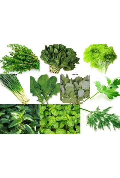 Karahasanoğlu Tarım Yerli 10 Çeşit Yeşillik Tohum Seti-2 Ort 1000 Ad Tohum