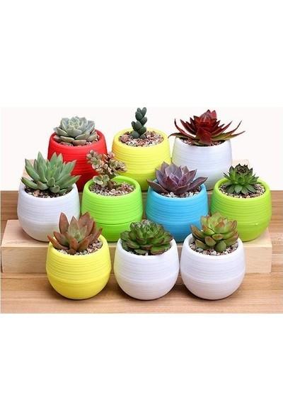 5HomeDeepo 5 Home Deepo 6 Lı Bitkili Karışık Renki Skuletn Saksı Seti Beton