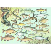 Dino Puzzle 1000 Parça Balıklar Puzzle