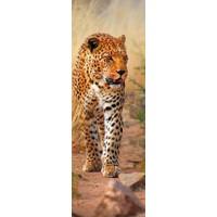 Dino Puzzle 1000 parça Kenya'da Leopar (Panorama Puzzle)