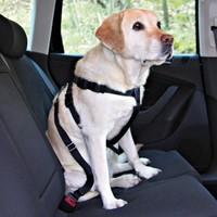 Köpek İçin Emniyet Kemeri X Large 80-110cm