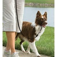 Easy Walk™ Headcollar - Medium Siyah Köpek Tasması