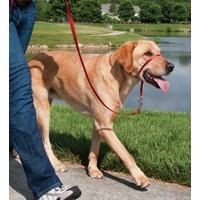 Easy Walk™ Headcollar - Large Kırmızı Köpek Tasması