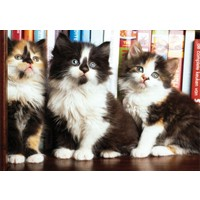 Puzz 1000 Parça Yapboz Kütüphanedeki Kediler