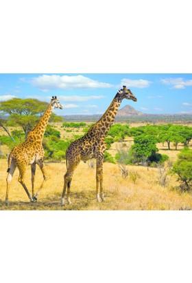 Dino Puzle 1000 Parça İki Zürafa Puzzle