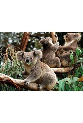 Dino Puzzle 1500 Parça Koalalar Puzzle