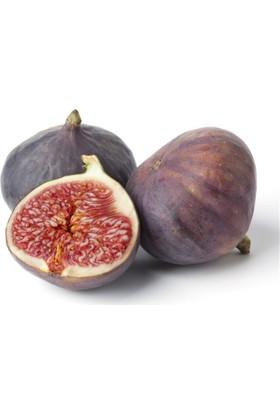 1001fidan Ficus Carica Bursa Siyahı, Dürdane, İncir Fidanı - 2 Yaşlı