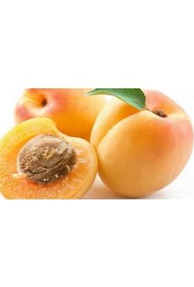 1001fidan Prunus Armeniaca Malatya Kayısı Fidanı