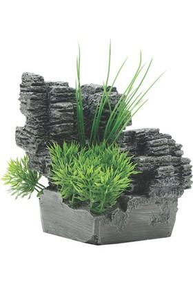 Fluval Chı İçin Bitkili Köşe Dekoru