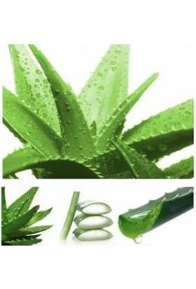 Agrobit Aloe Vera Bitkisi, Doğal Krem, Şifalı Bitki, Sarı Sabır, cilde faylı, Tıbbi Aloevera