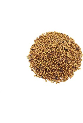 Yelken Sarı Hardal Tohumu 250 gr