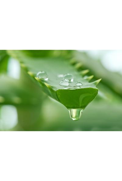 Shilibao Organik Aloe Vera Jel %98 250 ml