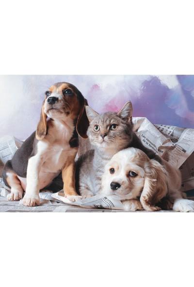 Puzz 1000 Parça Kedi Köpek Kardeşliği Yapboz