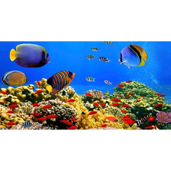 Yorkadesign Plaj Havlusu Balık Desenli
