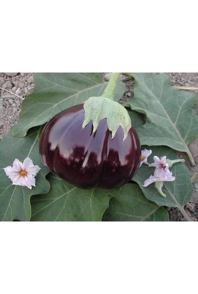 Yerli Dolmalık Patlıcan Tohumu - 5 gr (Ort 1000 Ad Tohum)