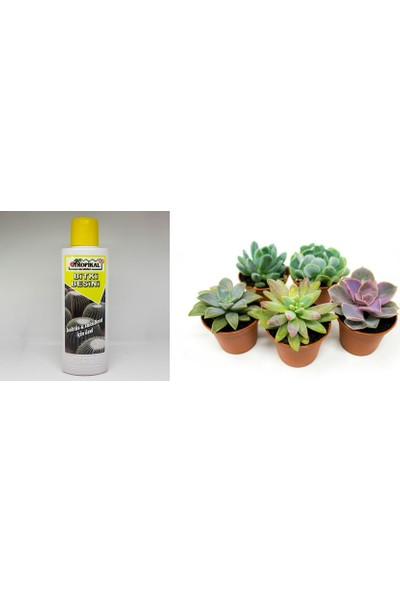Tunç Botanik Tropikal Kaktüs Sukulent Besini 6 Adet - 225 ml