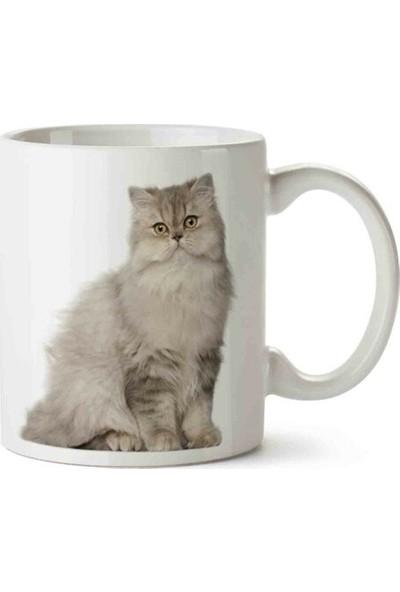 Öztürk Grup Kedi Sevimli Kedi Cat British Cinsi Baskılı Kupa Bardak