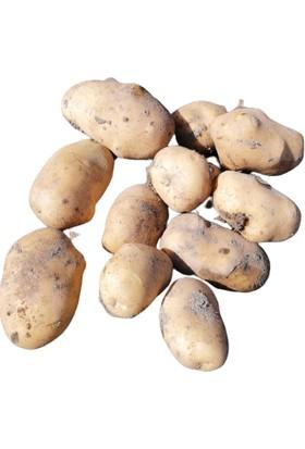 Agiria Kışlık Sarı Afyon Patatesi