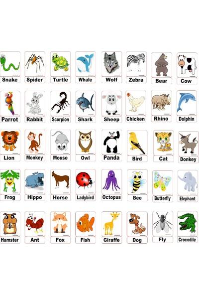 Manyetik İngilizce Kelime Kartları Hayvanlar - Animals