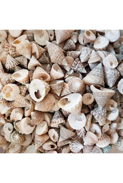 Turkuaz Deniz Kabuğu 500 gr Paket Astrea Undosa Naturel Mini