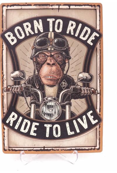 Lotis Born To Ride Kutusu