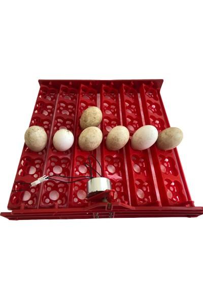 Efe Kuluçka Makineleri 144 Bıldırcın Yumurtası Kuluçka Makinesi