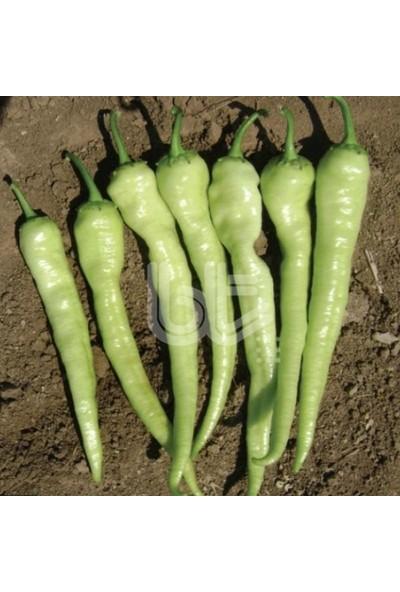 Baktar Doğal Çorlu Acı Çarliston Biber Tohum 350 Tohum