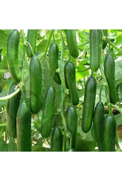 Ege Tarım Sırık Hıyar Salatalık Tohumu