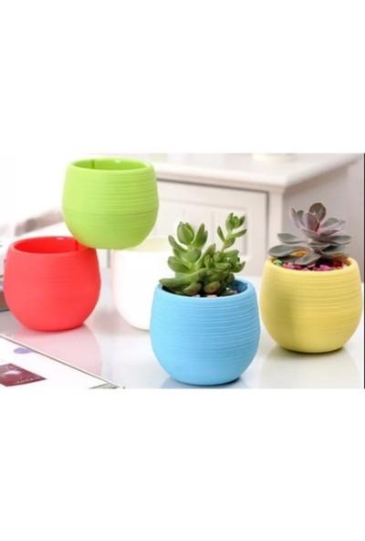Serinova 6'lı Mini Kaktüs Saksısı Renkli Çiçek Saksı Dekoratif Kaktüs Saksı Bahçe Saksı