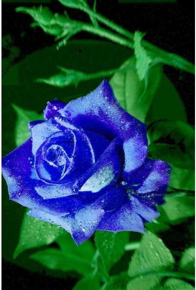 Hb Botanic Aşı Efsane Mavi Gül Tohumu / 5 Adet Tohum