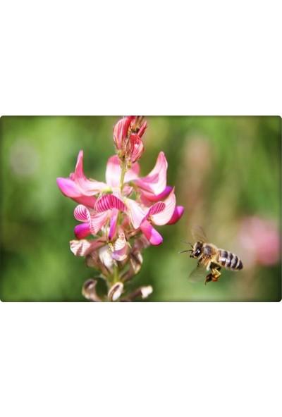 Korunga Tohumu(Kg)-Arı Bitkisi,yem Bitkisi Ambra Çeşidi