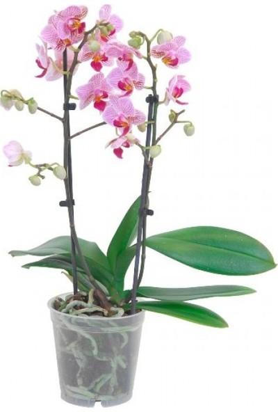 Genta Orkide Besini 500CC