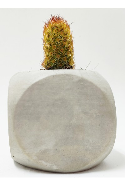 Hastunç Çiçekli Dekoratif El Yapımı Beton Saksı KC005