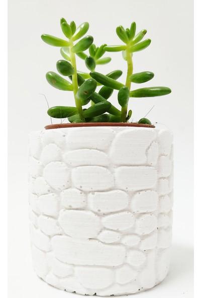 Hastunç Çiçekli Dekoratif El Yapımı Beton Saksı KC019