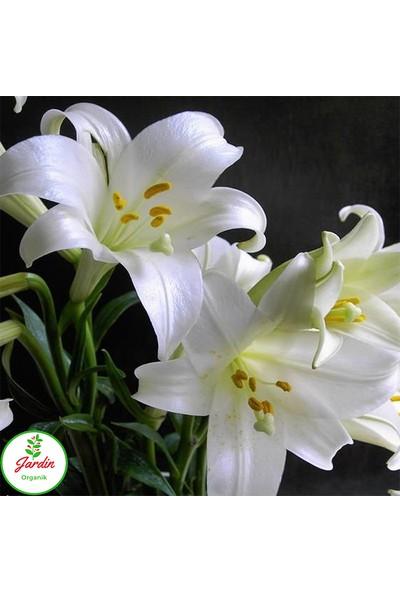 Oxe Garden Beyaz Lilium Zambak Soğanı Al 5'li Doğal Lilyum Ev Bahçe İçin İdeal