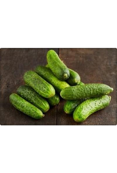 Arzuman Kornişon Salatalık Tohumu 10 gr