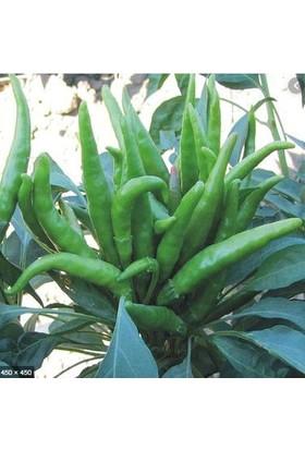 Çam Tohum Beş Parmak Acı Süs Biberi Tohumu Ekim Seti 25 Tohum Biber Tohumu Saksı Toprak Kombin