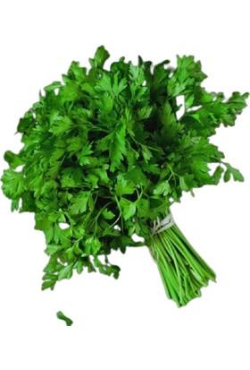 Arzuman Maydanoz Tohumu (Ince Yaprak) 25 gr Aromatik Kokulu
