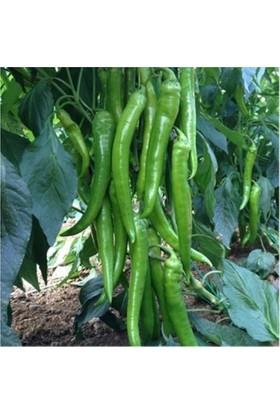 Ata Tohumculuk 30 Adet Tohum Süper Paket Sivri Acı Demre Biber Tohumu Biber Tohumu
