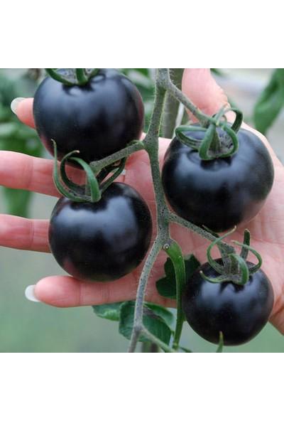 Tohumcumm 5 Adet Tohum Nadir Black Domates Tohumu Cherry Siyah Domates Tohumu