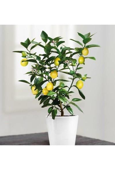 Tohumcumm 10 Adet Tohum Bodur Bonsai Limon Ağacı Tohumu Italyan Limon + Saksı + Toprak